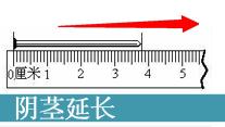 阴茎短小治疗_长春男科医院